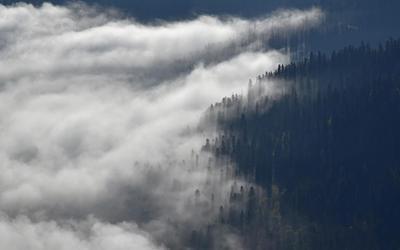 Пихтовый берег туманного моря