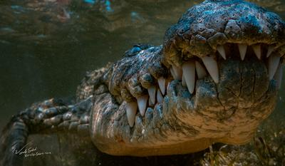 Подойди поближе, у меня что-то со слухом crocodile