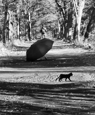 **Черный кот