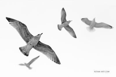 A Bird's Dream / И снится птице... птица птицы чайка чайки полет крылья bird birds gull flight flying wings