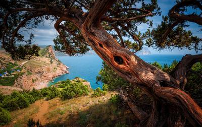 А вот и оно, дерево!