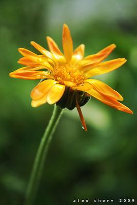 *** цветок