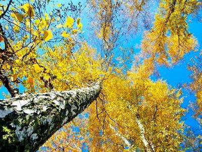 осень Алтая
