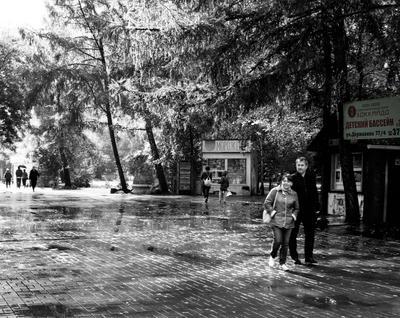 Парк. После дождя