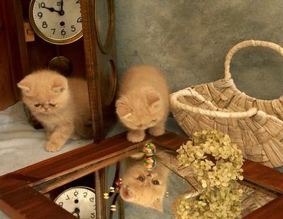 грустяшки котята