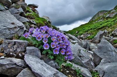 Перед грозой природа цветы горы