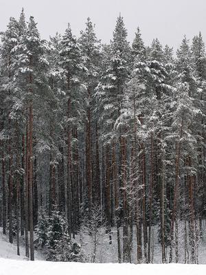 Последний снегопад