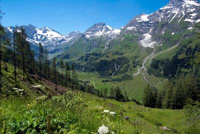 Альпы в июле