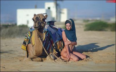 Titanic of the desert © camel