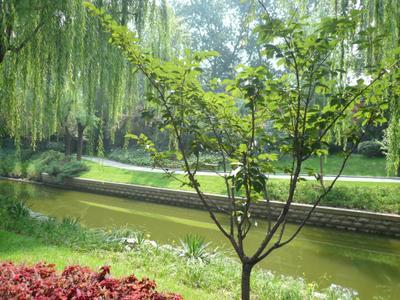 *** Пекин. Парк.