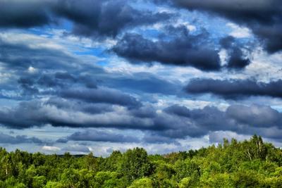 Яркие краски лета лето природа пейзаж деревья облака