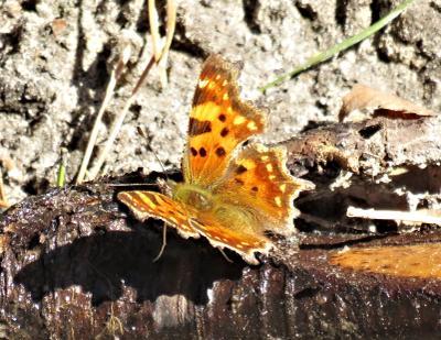 Весенняя бабочка весна насекомые бабочка