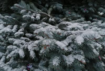 СНЕЖНЫЙ Санкт-Петербург зима 2021 снег ёлка красота снегопад