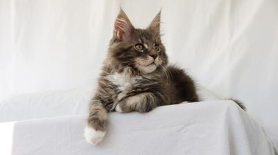 афоня кот