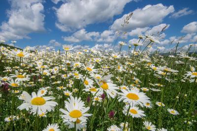 Настроение Байдарской долины цветы пейзаж природа Крым