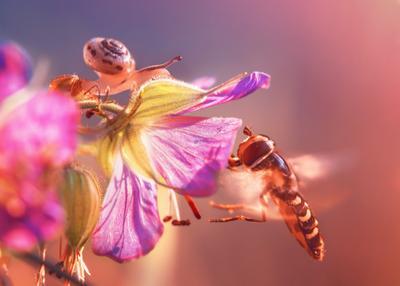 *** лето цветок природа муха улитка жужжало