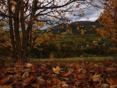 *** Карпаты осень октябрь Боржава