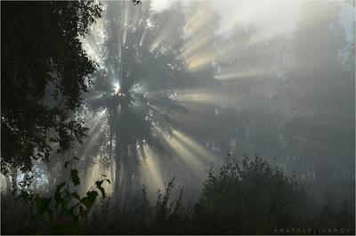 В круге света Туман свет лучи утро