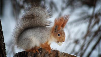 Белка животные белка зима парк