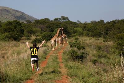 Куда же вы? Жирафы Африка