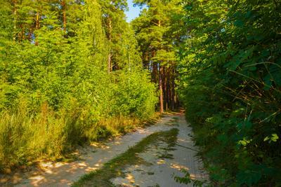 По лесным дорогам Славутича Лесдорога Кусты