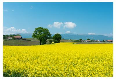 yellow-blue Swiss pastorale