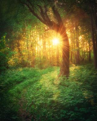 Macigal forest Пейзаж Лес закат солнце дерево Пермский край вечер