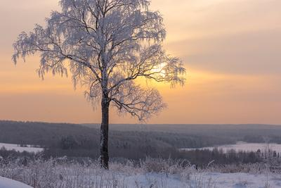 Мороз-художник пежма зима дерево закат снег иней