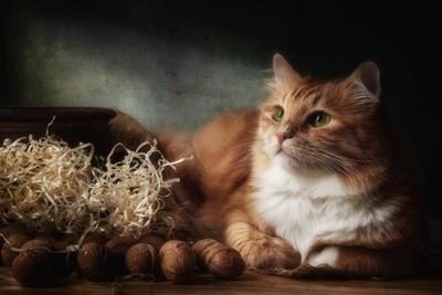 Кот и орехи натюрморт композиция постановка сцена орехи кот питомец друг рыжий