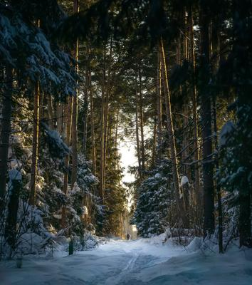 *** балашиха лес
