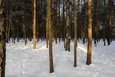 Солнечный день. лес деревья зима природа снег