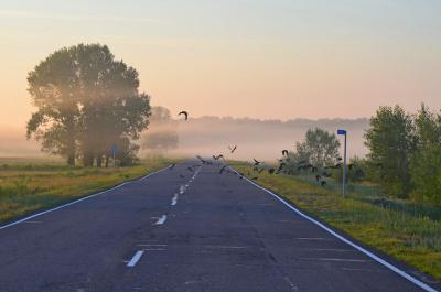 Шоссе в Никуда Россия Сибирь шоссе дорога туман