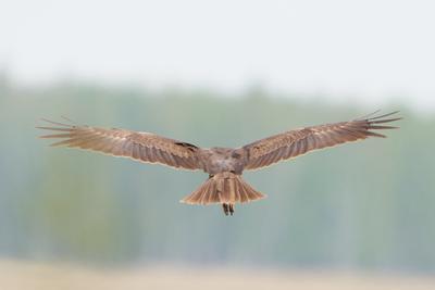 Полёт хищника фотоохота птицы хищники природа