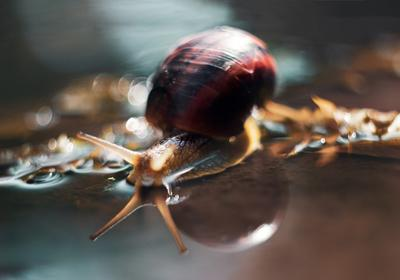 The Look snail shell water wet bokeh light shine reflection horns blue teal orange yellow brown house look вода улитка раковина мокрый рожки отражение голубой оранжевый боке свет deep dark