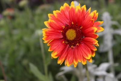 Цветок Цветок природа