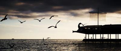 домой ялта, черное море, Арго, Золотое руно, чайка