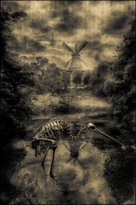 Темный пруд