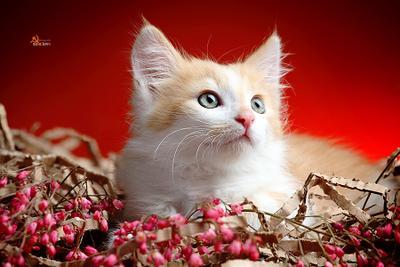 Следом за мышкой должна быть и кошка))) Котенок рыжий