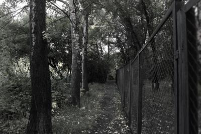 *** деревья тропинка пргулка чёрнобелый