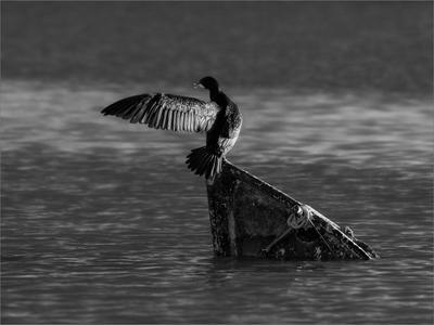 """""""Проход запрещён"""" птицы баклан озеро вода закат ч б"""
