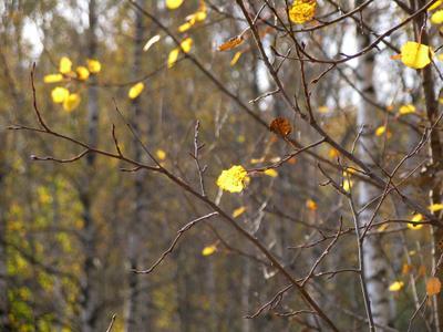 *** листик осень ноябрь