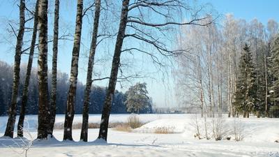 Под голубыми небесами великолепными коврами, блестя на солнце, снег лежит Павловский парк зима пруд лес