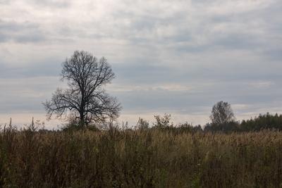 Старая липа деревня, осень, липа, дерево, пейзаж