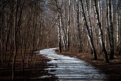 Полосатый лес мытищинскийлес