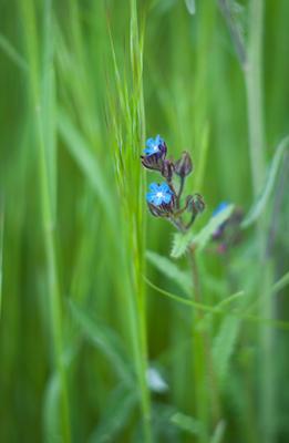 еще о весне весна цветок спидчук алексей