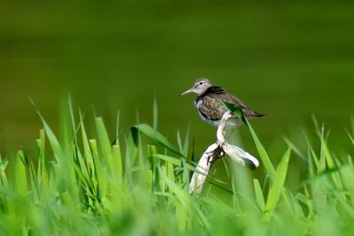 Наблюдаем птицы