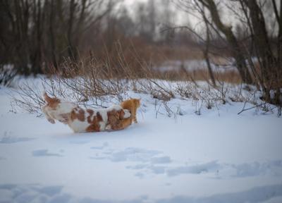 Догонялки кошка собака дружба кокер-спаниель рыжие друзья