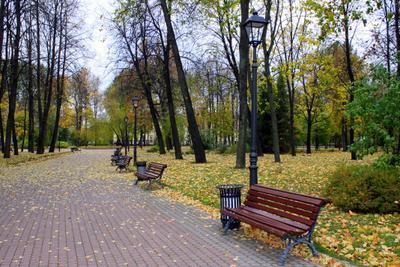 Городской парк парк осень листья