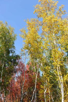 RGB осень поле темиртау кзахстан Локомотив