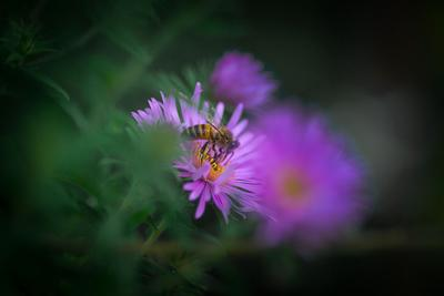 Цветы осень цветы пчела